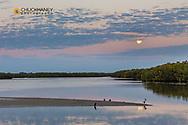 Full moon sets over pond at Ding Darling National Wildlife Refuge in Sanibel Island, Florida, USA