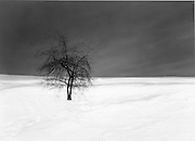 A black & white winter scene of a bare sapling on a snowy hill with a dark clear sky