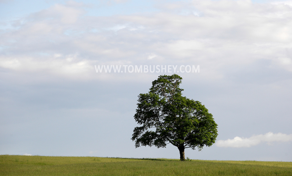 Goshen, New York - A lone tree stands in a farm field in the Black Dirt region on May 21,, 2011.