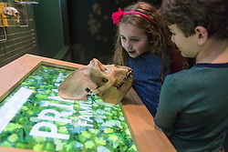 A new temporary exhibition at National Museum of Scotland in Edinburgh  features 60 new taxidermy specimens of monkeys, apes, lemurs, lorises and bush-babies. The taxidermy was specially commissioned by the exhibition which is the first to show primates behaving as if they were in the wild.<br /> <br /> The exhibition opens in 9 December and runs until Sunday 23 April 2017.<br /> <br /> Pictured: Emily Mann and Lucas Hashem-Ford (both aged 7)