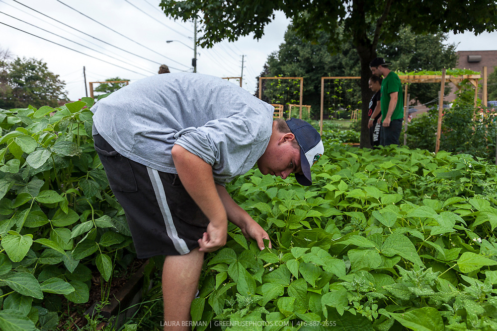 The gardeners working in the market garden at Bendale Business and Technical Institute, Toronto.