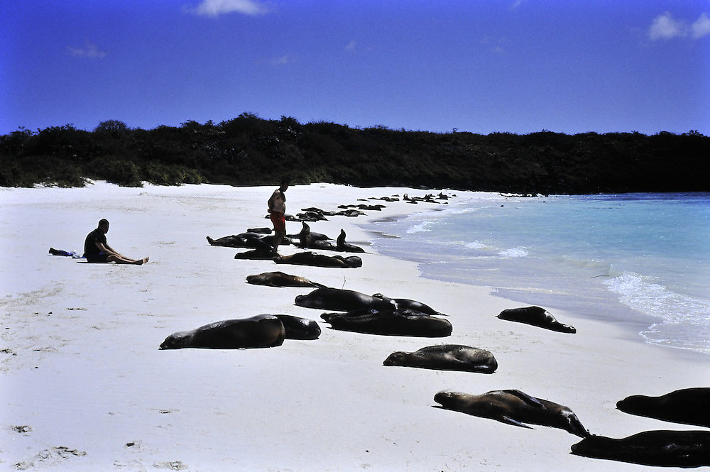Napping on the white sands of Santa Cruz Island,Galapagos