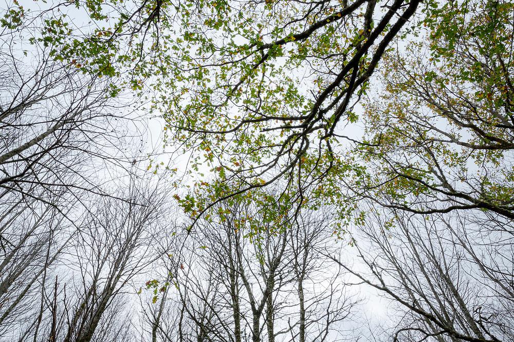 Woods at Serra do Açor. Portugal