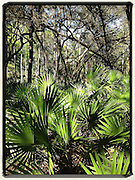 Gary Cosby Jr.  iPhone photographs<br /> A scenic in Florida.