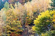Herbstwald, Schmilka, Sächsische Schweiz, Elbsandsteingebirge, Sachsen, Deutschland | autumn forest, Schmilka, Saxon Switzerland, Saxony, Germany