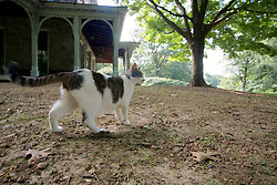 This nameless cat adopted the grounds as its own. (Bas Slabbers/for NewsWorks)