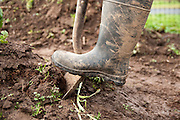 Boot and shovel work the dirt and soil.