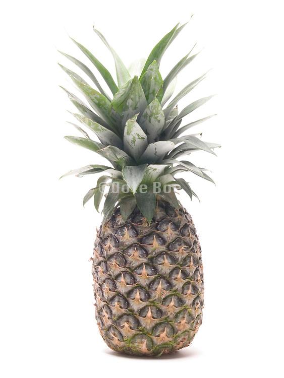 still life of a pineapple