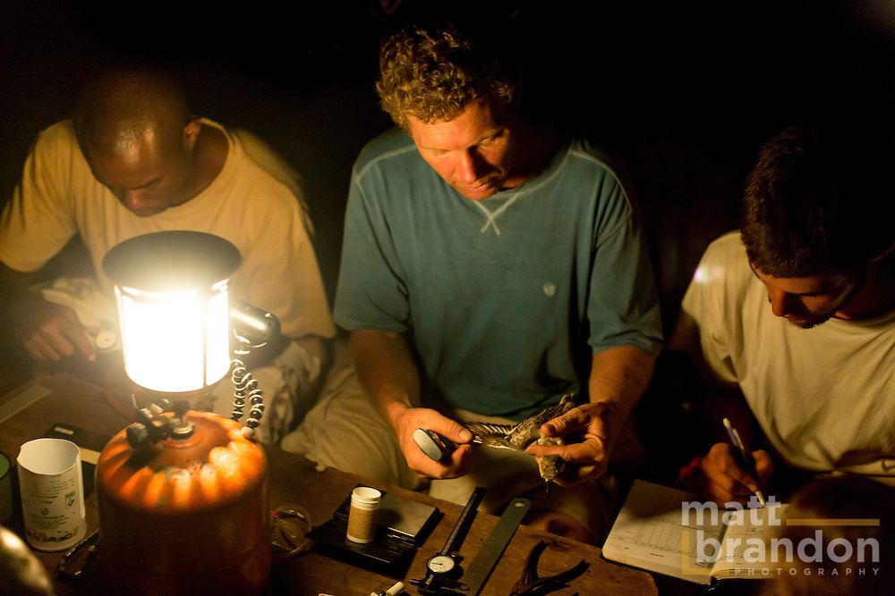 Martin, Colin Jackson and a volunteer measure and record bird data throughout the night at Mida Creek.