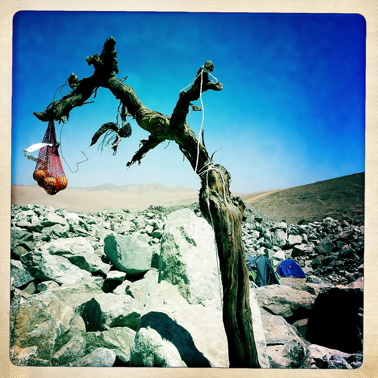 """Un arbol seco con una malla colgando desde una de sus ramas es visto en el campamento Esperanza. Plan B, es un ensayo fotografico basado en aquellas cosas que la mirada somera no permite ver, de los días de espera, angustia, soledad y fe que las familias de los 33 hombres atrapados en la mina San Jose dejaron en el paisaje arido del desierto de Atacama tras el esperado rescate. """"Plan B"""", tambien es un acto de fe personal, por intentar plasmar en un relato diferente, sin más pretensión que la mirada interna a los sentimientos que esa montaña atrapó implacable y para siempre, pero que bajo la mirada superficial de los medios no permite escudriñar por tratarse de pequeños fragmentos que apelan a emociones individuales y no a la masividad que persiguen los reportes de prensa. Este ensayo es una invitación abierta a descubrir los pequeños milagros que florecieron en la montaña y en el día a día de cada una de las familias que nunca dejaron de creer en la vida, aun así se enfrentaran a la inmensidad del desierto y a las minimas espectativas de vida que el lugar entregaba.""""Plan B"""", esta constituido por fotografías ejecutadas en su totalidad con un telefono iPhone 4 y la aplicacion Hipstamatic. ROBERTO CANDIA / REVISTA NUESTRA MIRADA"""