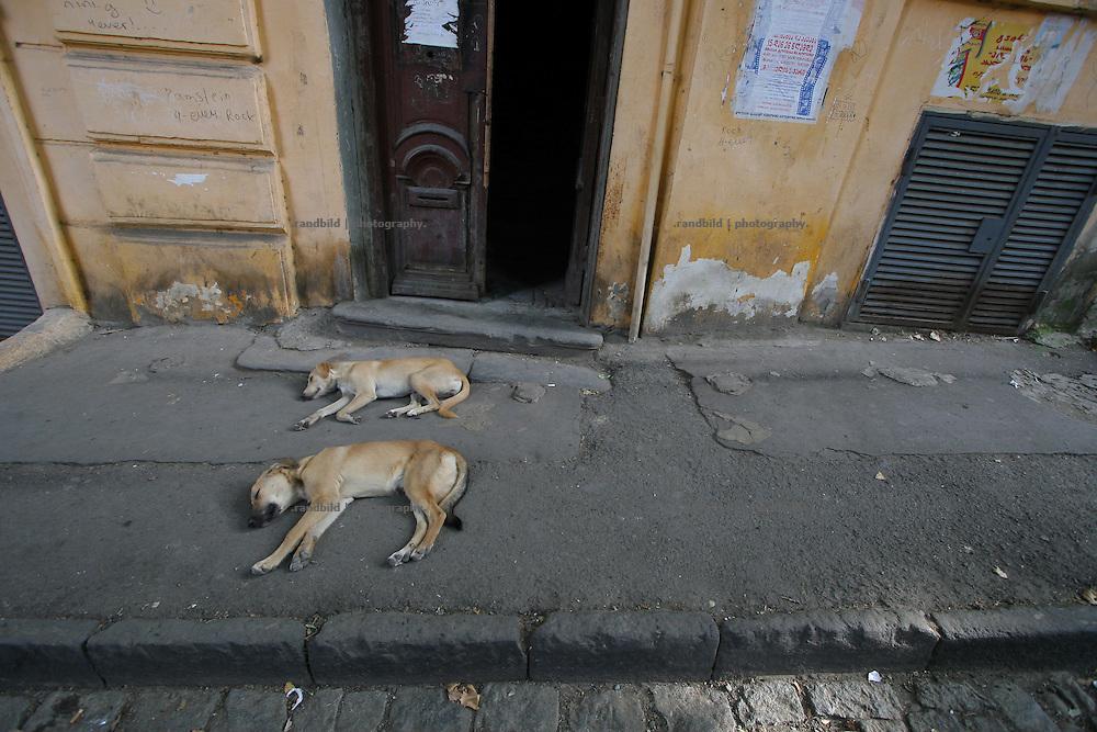 Zwei Strassenhunde schlafen auf einem Bürgersteig in der Altstadt von Tiflis. Two unowned dogs sleeping on a sidewalk in old city center of Tbilisi