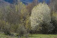 Linden Tree Retreat & Ranch, Velika Plana, Velebit mountains Nature Park, Croatia