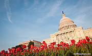 Image of the United States Capitol Building in Spring, Washington, D.C.