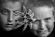 Wyatt Burrows (right),  a 10-year old from Abingdon, and his brother Raymond, 12, watch Wyatt's Chilean rose hair tarantula Fifi as it crawls around the tank he keeps in his room. The seven-year-old spider was two when he got it. It is difficult to know if the spider, which can live up to 20 years, is a male or female.