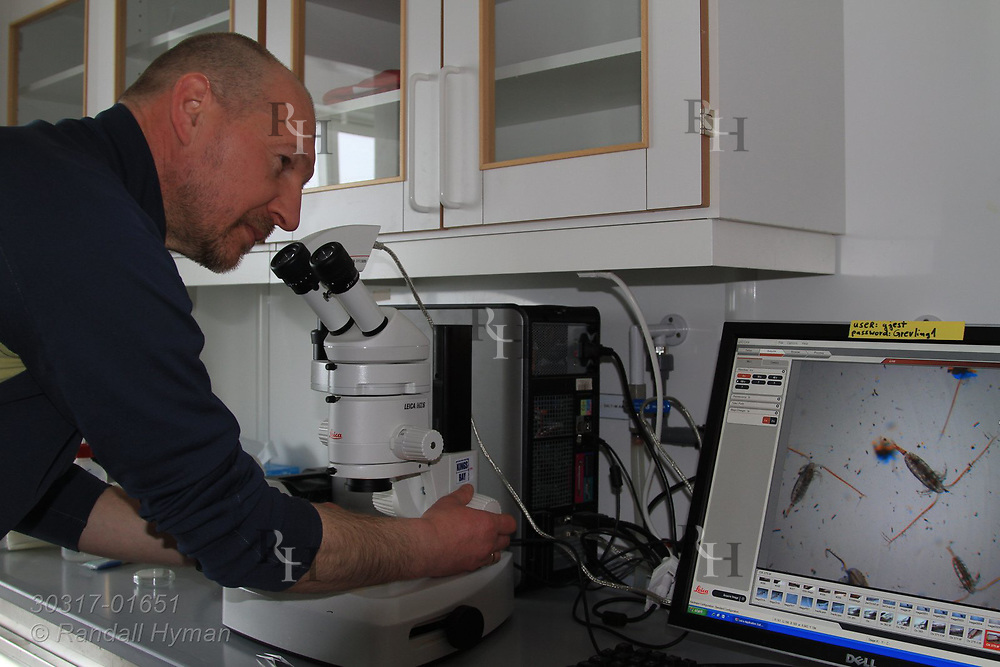 Polish scientist views Calanus finmarchicus copepods on stereoscope monitor at the international science village of Ny-Alesund on Spitsbergen island in Kongsfjorden; Svalbard, Norway.
