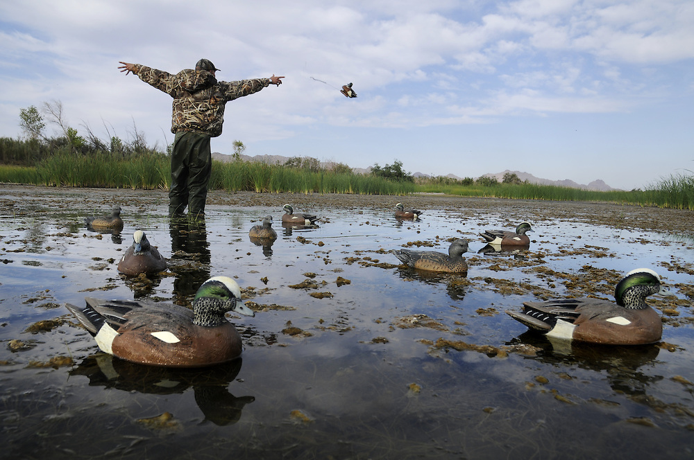 A hunter throws out a decoy while settign up his spread for an afternoon hunt.