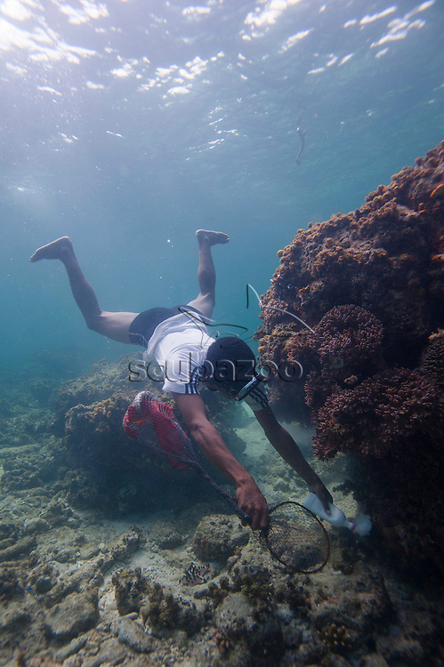 A cyanide fisherman freediving on a shallow reef, using a bottle of cyandide solution to kill fish inside a coral bommie, holding a net with caught fish inside, Mabul Island, Sabah, Malaysia.