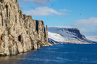 Alkefjellet or Kapp Fanshawe in Hinlopen Strait with the cliff faces hosting 100,000 pairs of thick-billed murres in Svalbard, Norway.