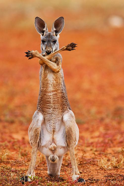 outback big lick
