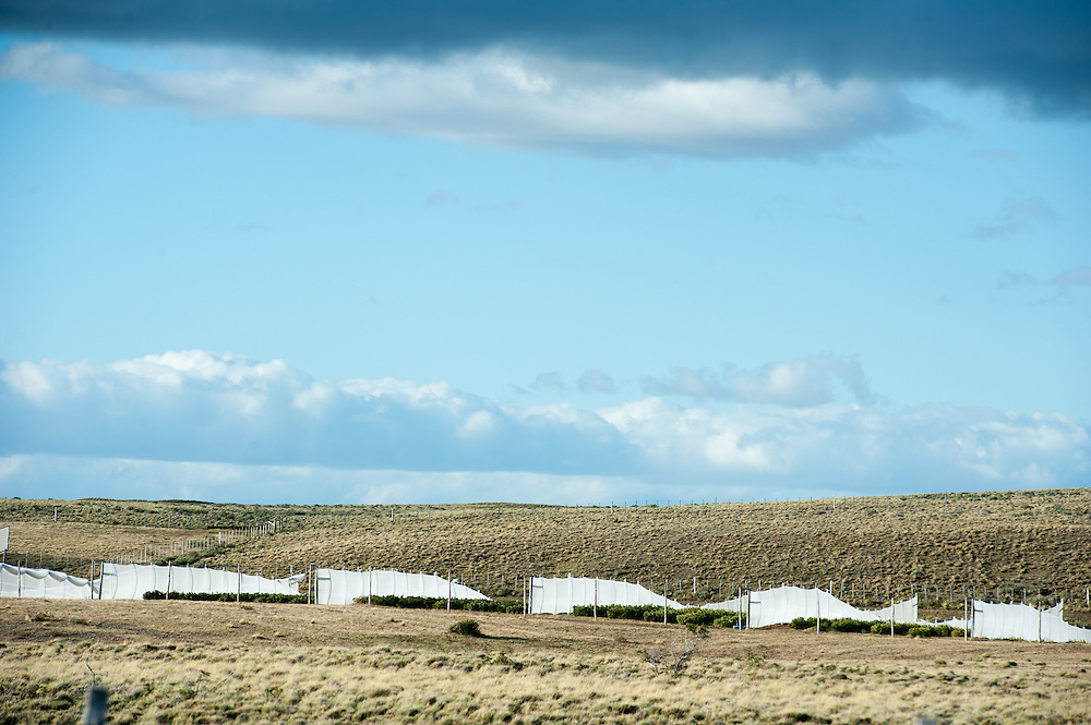 Ag production with wind blocks, patagonia Chile