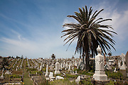 The Waverley Cemetery opened in 1877 and is a cemetery located on top of the cliffs at Bronte in the eastern suburbs of Sydney. It is noted for its largely intact Victorian and Edwardian monuments. The cemetery contains the graves of many significant Australians including and the poet Henry Lawson and Australia's first Prime Minister, Sir Edmund Barton, who is interred at South Head...Architecturally, Waverley Cemetery is significant in that it showcases examples of Stonemasonry and funerary art dating back from the 19th century,with features (such as the gates, buildings and fencing) that due to their intact nature are considered of outstanding aesthetic value...Poetically, the juxtaposition of the tombs and memorials overlooking the pacific ocean of the sea makes the cemetery a unique place.