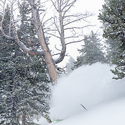 Forrest Jillson jumping on the powder train through the backcountry trees of the Tetons.