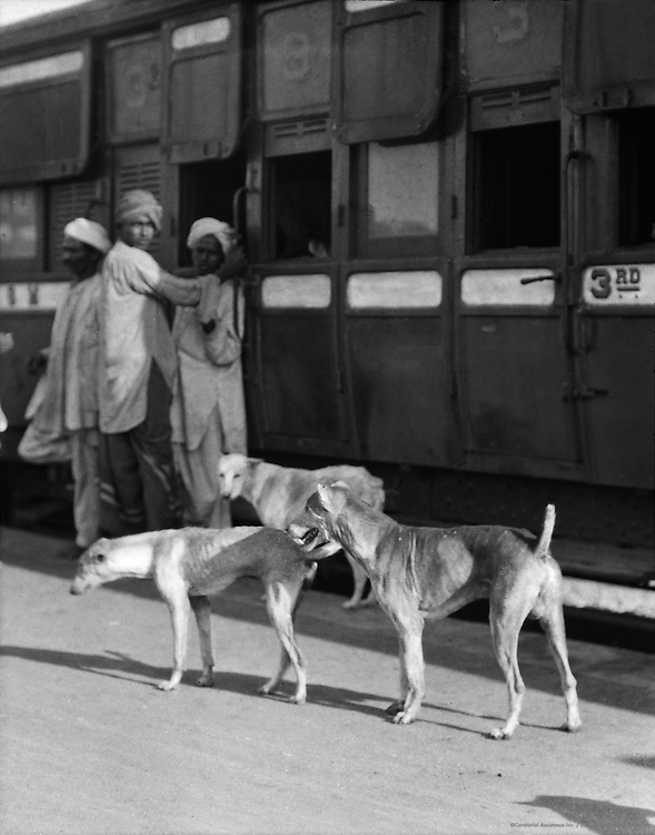 Stray Dogs, Railway Station, India, 1929