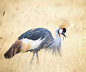Birds* - Cranes, Bustards, Secretary Bird and Flamingo