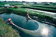 AQUACULTURE, FLORIDA Tropical Fish Farm - Ekkwill Farms near Sarasota; using seine nets to gather freshwater Amazon Black Tetras