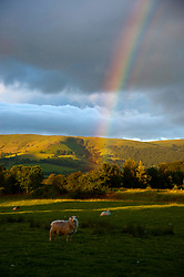 © Licensed to London News Pictures. 20/06/2019. Builth Wells, Powys, Wales, UK. On the eve of the Summer Solstice, a rainbow is seen against a dark foreboding sky in the Wye Valley at Builth, Wells, Powys, Wales, UK. Photo credit: Graham . Lawrence/LNP