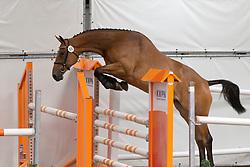 066 - Elinea VDL<br /> KWPN Paardendagen - Ermelo 2012<br /> © Dirk Caremans