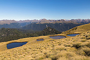 Golden tussock and tarns along the hike to Mount Burns