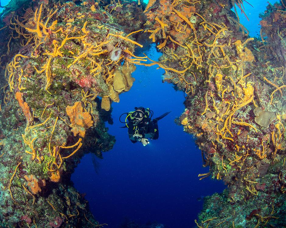 Underwater Arches in Cozumel, MX