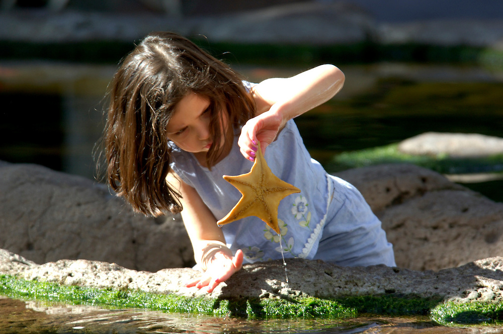 Girl picking up Sea Star, Sea World, San Diego, California, United States of America