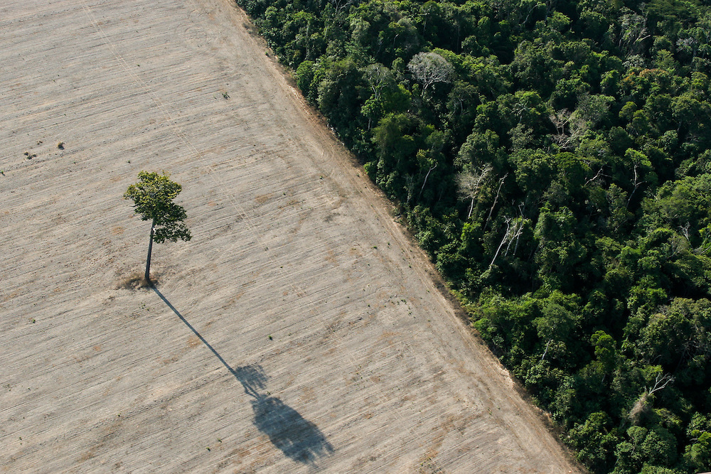 """06/08/05. Flight around Sinop andaround the """"Parque das Castanheiras"""" . The Brasilian Nut Tree """"Castanheira"""" is protected in Brasil, but plenty had been logged (some where left alone standing on the soy fields)...(c)Daniel Beltra/Greenpeace"""