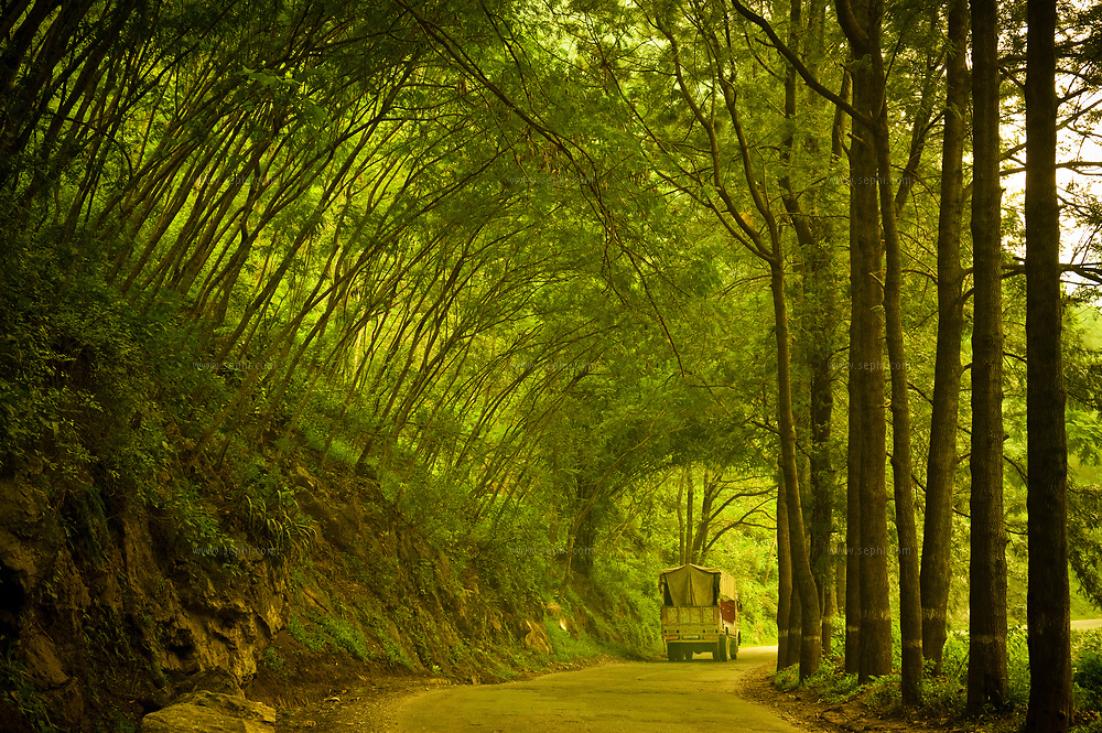A truck driving through a forest road in the state of Uttarkand, in the upper Himalayas, Spetember 2009
