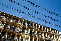 Pigeons rest on electrical wires above the busy streets of Yangon, Myanmar.
