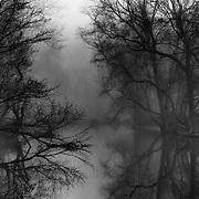 Stony Brook, Fog, Spring Morning