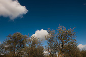 Montepulciano - Il frantoio