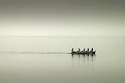 A team of rowers training in the Mediterranean water near Marciana Marina, Island of Elba, Italy