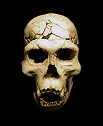 Homo georgicus, Dmanisi D2700 cranium and D2735 jaw, about 1.8 million years ago. Cast of fossil skull found at the open air site of Dmanisi, Georgia in 1999.  Dmanisi provides evidence for a very early presence of the genus Homo outside Africa.  They were small-brained hominids with a small body size.  The finds were associated with simple stone tools such as flakes and chopping tools.