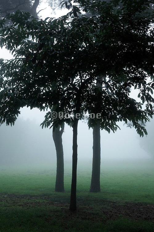 rural landscape with fog and trees