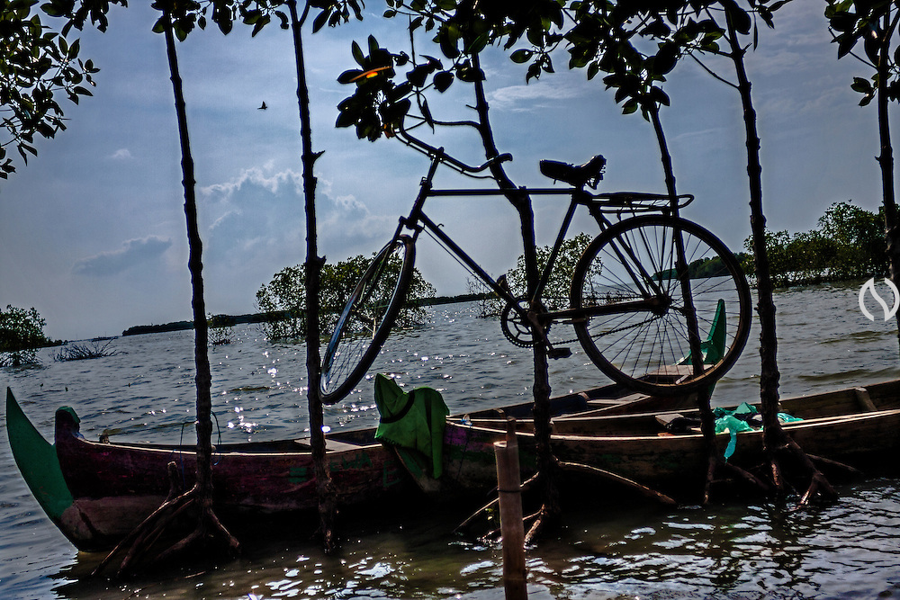 A bike is hang on the mangrove in Bedono village, near Semarang.