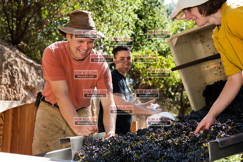 Winemaker Kent Fortner, of Road 31 Wine Company,(L), and his crew crush his Pinot Noir wine grapes harvested from the Carneros District, a cool, wind-swept region that borders the San Pablo Bay and marks the entrance to both Napa and Sonoma valleys. Photo by Kim Kulish
