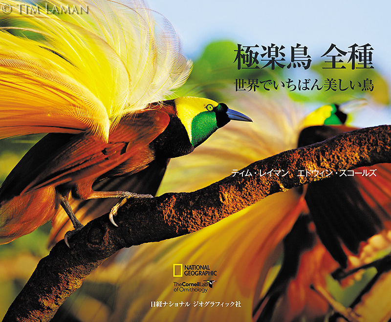 Birds Of Paradise: Revealing The World's Most Extraordinary Birds has been translated into Japanese and is available for purchase.  One great addition to the book is the Japanese edition contains QR codes that take you directly to videos of the birds.  You can order your signed soft cover copy by going to Tim's Fine Art Store at the link above.<br />