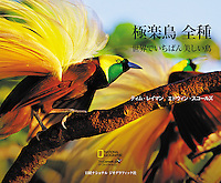 Birds Of Paradise: Revealing The World's Most Extraordinary Birds has been translated into Japanese and is available for purchase.  One great addition to the book is the Japanese edition contains QR codes that take you directly to videos of the birds.  You can order your signed soft cover copy here.