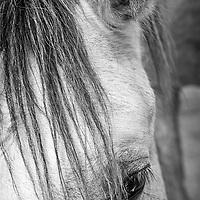 Horse portrait, Rockwall, TX