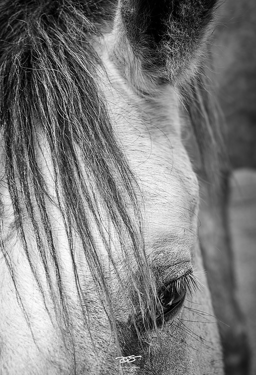 Horse portrait, Rockwall, TX