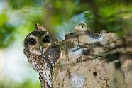 Cuba's endemic / endangered birds