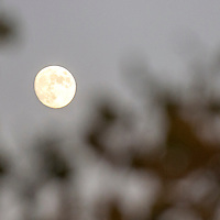 110414     Cayla Nimmo<br /> <br /> A glimpse of the moon can be spotted through fall leaves at University of New Mexico's Gallup campus Tuesday night. The next full moon will occur Thursday November 6.